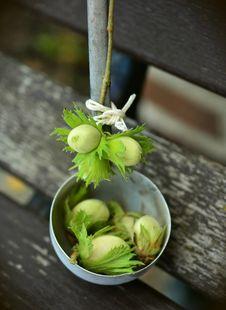 Free Vegetable, Plant, Floristry Stock Photos - 101100713