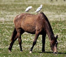 Free Pasture, Mare, Wildlife, Fauna Stock Images - 101103824