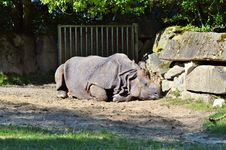 Free Rhinoceros, Fauna, Terrestrial Animal, Zoo Royalty Free Stock Photography - 101148957