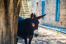 Free Donkey, Horse Like Mammal, Pack Animal, Livestock Royalty Free Stock Photography - 101150067