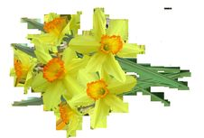 Free Flower, Yellow, Cut Flowers, Flower Arranging Stock Images - 101150144