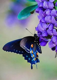Free Butterfly On Flower Stock Photo - 101151890