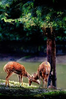 Free Deer Stock Photos - 101152143