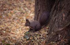 Free Squirrel, Mammal, Fauna, Fox Squirrel Royalty Free Stock Image - 101153586
