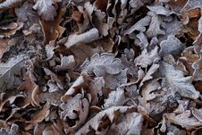 Free Leaf, Frost, Wood, Scrap Stock Images - 101154204