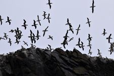 Free Bird, Sky, Flock, Animal Migration Royalty Free Stock Photos - 101154608