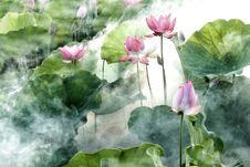 Free Flower, Plant, Lotus, Sacred Lotus Stock Images - 101154944