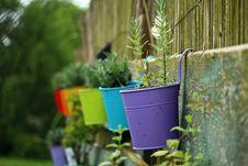 Free Green, Plant, Flora, Garden Royalty Free Stock Photos - 101155578