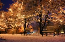 Free Winter, Nature, Snow, Branch Stock Photography - 101155902