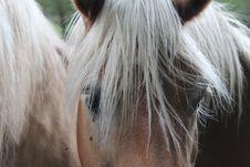 Free Hair, Horse, Mane, Horse Like Mammal Stock Photography - 101155982
