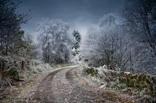 Free Winter, Sky, Tree, Snow Stock Photography - 101156152