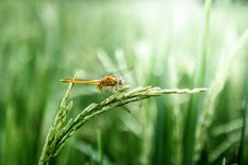 Free Insect, Dragonfly, Dragonflies And Damseflies, Grass Royalty Free Stock Photo - 101156295