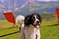 Free Dog Breed, Dog, Landseer, Grass Royalty Free Stock Photos - 101158208