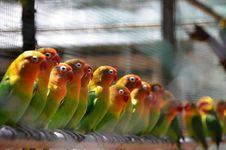 Free Bird, Parrot, Parakeet, Fauna Royalty Free Stock Photos - 101158428