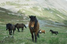 Free Horse, Pasture, Ecosystem, Horse Like Mammal Royalty Free Stock Photos - 101165948