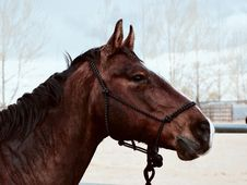 Free Horse, Halter, Bridle, Rein Royalty Free Stock Photo - 101175725