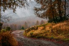 Free Nature, Path, Ecosystem, Leaf Royalty Free Stock Photos - 101176088