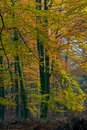 Free Landscape Of A Forest With Colorful Autumn Trees Stock Photos - 10121013