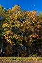 Free Landscape Of A Farmland With Colorful Autumn Trees Stock Photo - 10121790