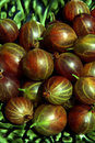 Free Gooseberries Stock Images - 10124594