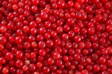Free Red Currant Royalty Free Stock Photo - 10120035