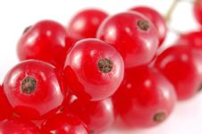 Free Red Currant Stock Image - 10120121