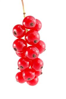 Free Red Currant Stock Photography - 10120142