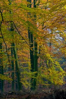 Landscape Of A Forest With Colorful Autumn Trees Stock Photos
