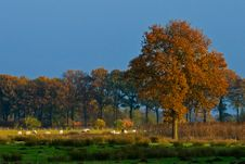 Free Landscape Of A Farmland With Colorful Autumn Trees Royalty Free Stock Image - 10121296