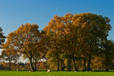 Landscape Of A Farmland With Colorful Autumn Trees Royalty Free Stock Image