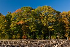 Landscape Of A Farmland With Colorful Autumn Trees Stock Photography