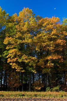 Landscape Of A Farmland With Colorful Autumn Trees Stock Photo