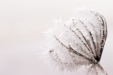 Free Hoar Frost Or Soft Rime On Plants At A Winter Day Royalty Free Stock Photo - 10121955
