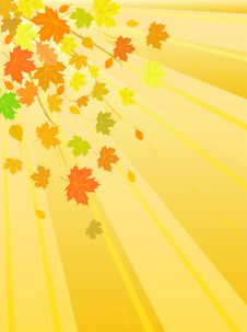 Free Vector Autumn Leaves Stock Photo - 10124360
