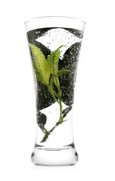 Free Fresh Beverage Royalty Free Stock Image - 10124816