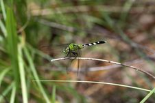 Free Dragonfly Royalty Free Stock Photography - 10125567