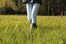 Free Grass, Grassland, Field, Grass Family Royalty Free Stock Image - 101220246
