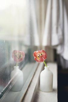 Free Flower, Petal, Still Life Photography, Floristry Royalty Free Stock Photo - 101221605