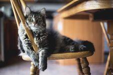 Free Cat, Small To Medium Sized Cats, Mammal, Cat Like Mammal Royalty Free Stock Photo - 101222075
