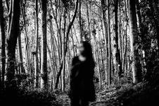 Free Tree, Black, Nature, Photograph Royalty Free Stock Photography - 101222657