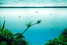 Free Water, Sea, Ecosystem, Vegetation Royalty Free Stock Photo - 101223185