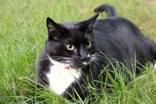 Free Cat, Black Cat, Whiskers, Fauna Stock Image - 101225671