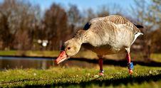 Free Bird, Water Bird, Beak, Ducks Geese And Swans Royalty Free Stock Photo - 101227975