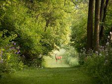 Free Nature, Vegetation, Green, Woodland Stock Images - 101228774