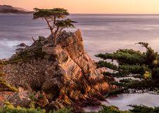 Free Nature, Tree, Coast, Vegetation Royalty Free Stock Photos - 101261438