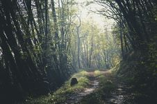 Free Nature, Woodland, Forest, Tree Royalty Free Stock Image - 101263036