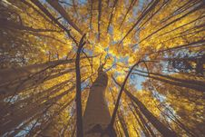 Free Nature, Tree, Yellow, Woody Plant Royalty Free Stock Photography - 101267887