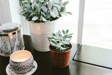 Free Flowerpot, Plant, Tableware, Drinkware Royalty Free Stock Photo - 101269835