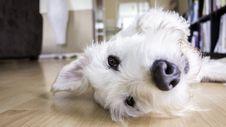 Free Dog, Dog Breed, Dog Like Mammal, Nose Royalty Free Stock Image - 101288576