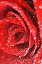 Free Fresh 2 Stock Photography - 10134352